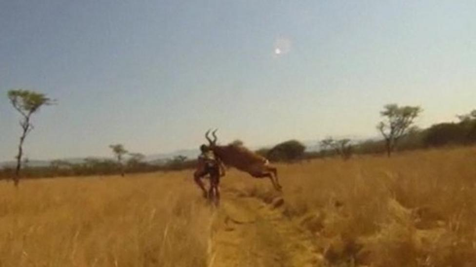 Antelope crashes in to cyclist