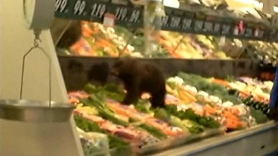 Bear cub wanders into supermarket