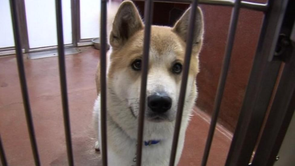 Why are more pets being abandoned?