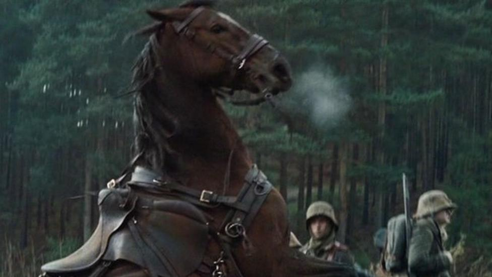 The horses sent to fight in war