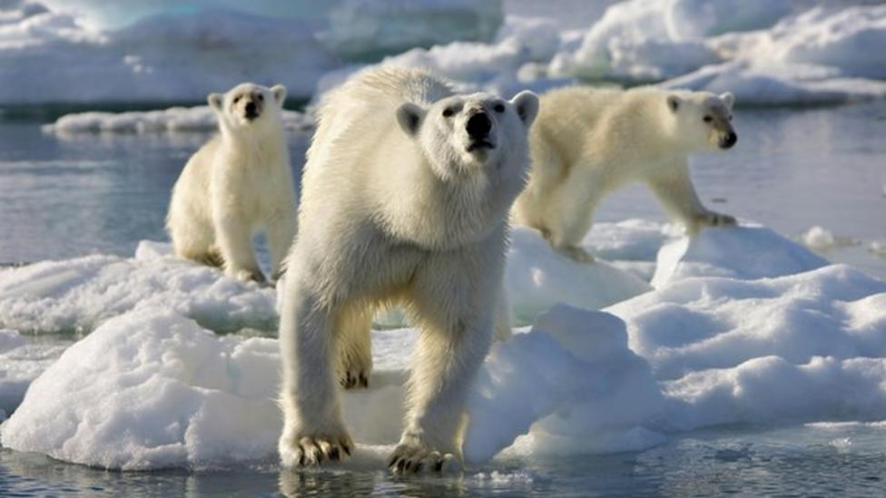 How do they film Frozen Planet?