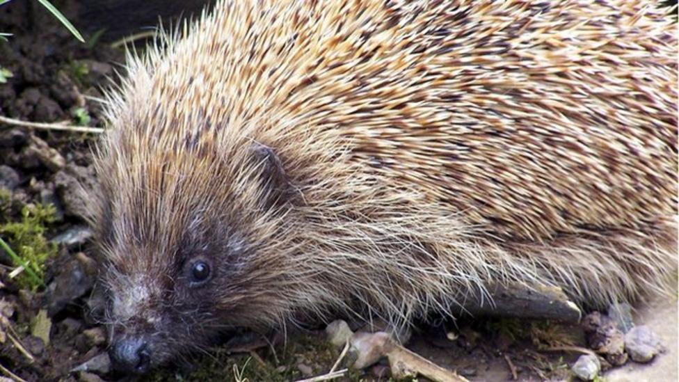 How to keep a hedgehog warm