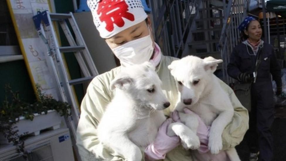 Animal rescue in Japan's radiation zone