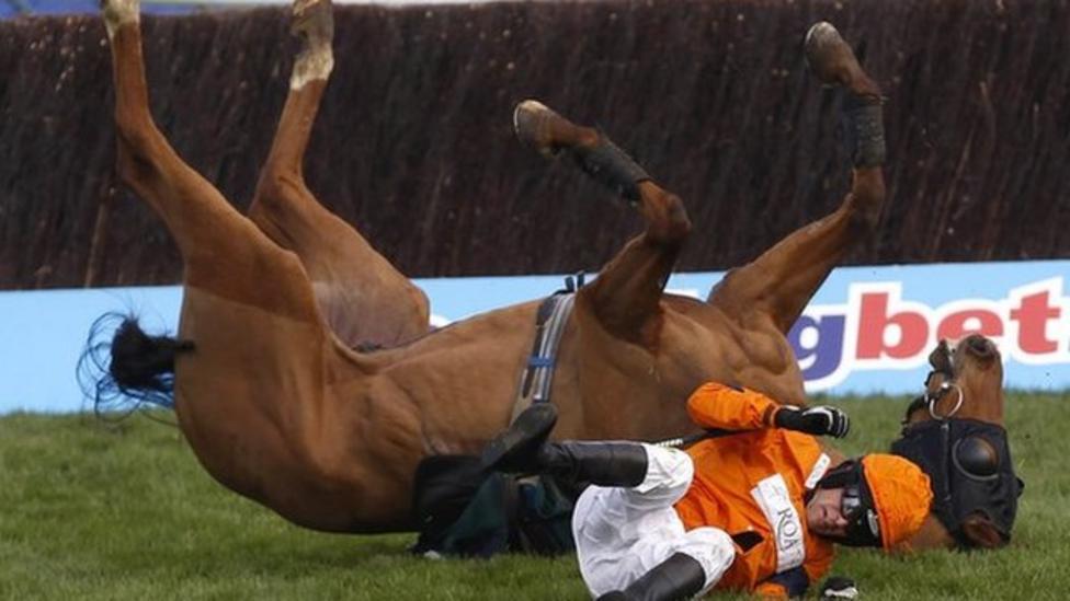 Five horses die at Cheltenham