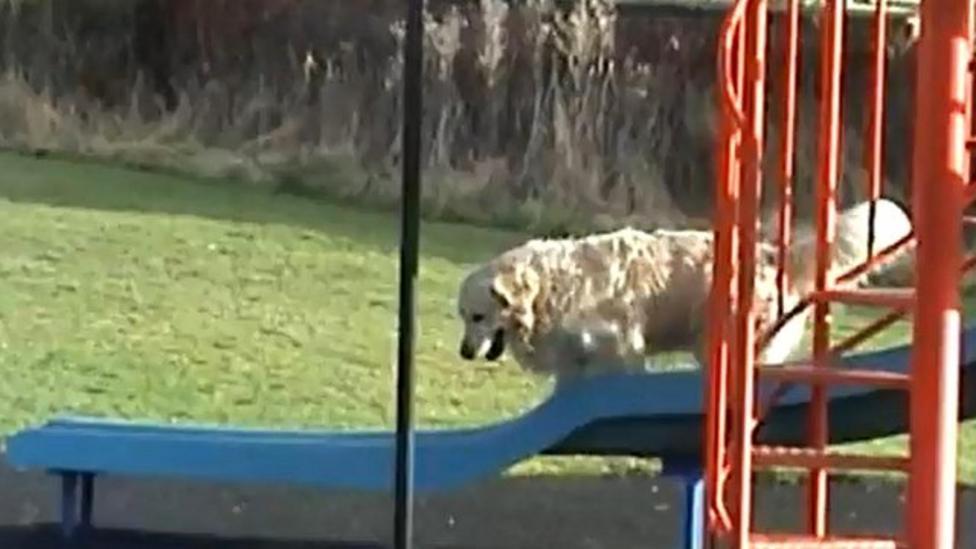 Dog slide