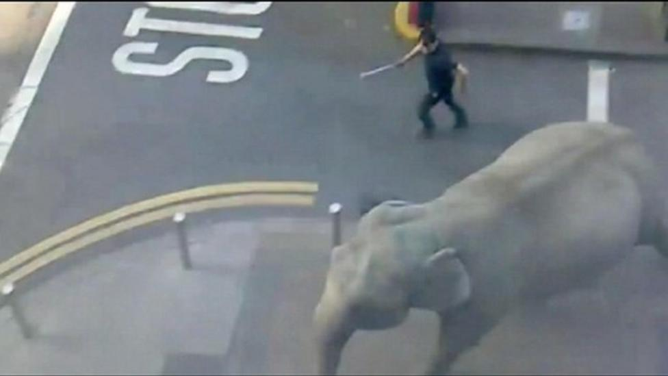 Elephant escapes from circus