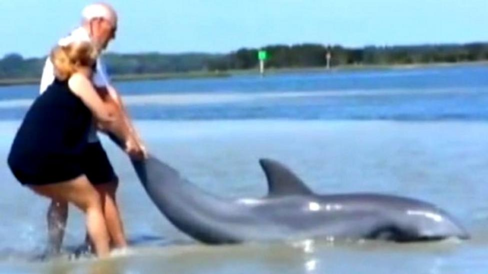 Family's dolphin rescue mission