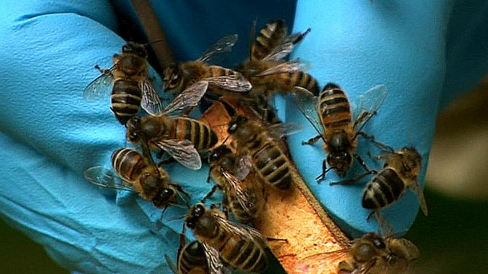 Rainy April is trouble for bees