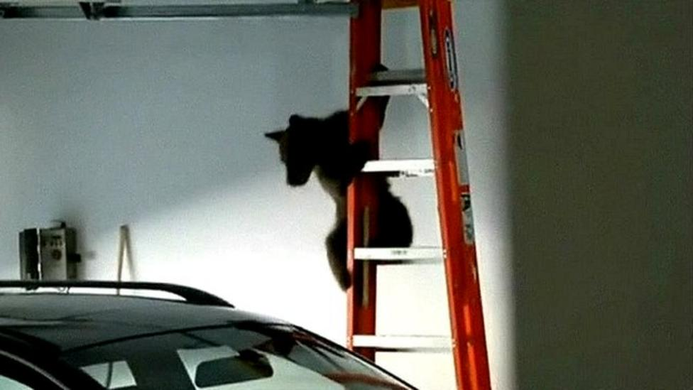 Bear rescued from garage