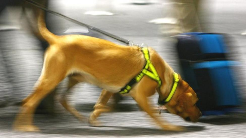 Airport dogs sniff out trouble