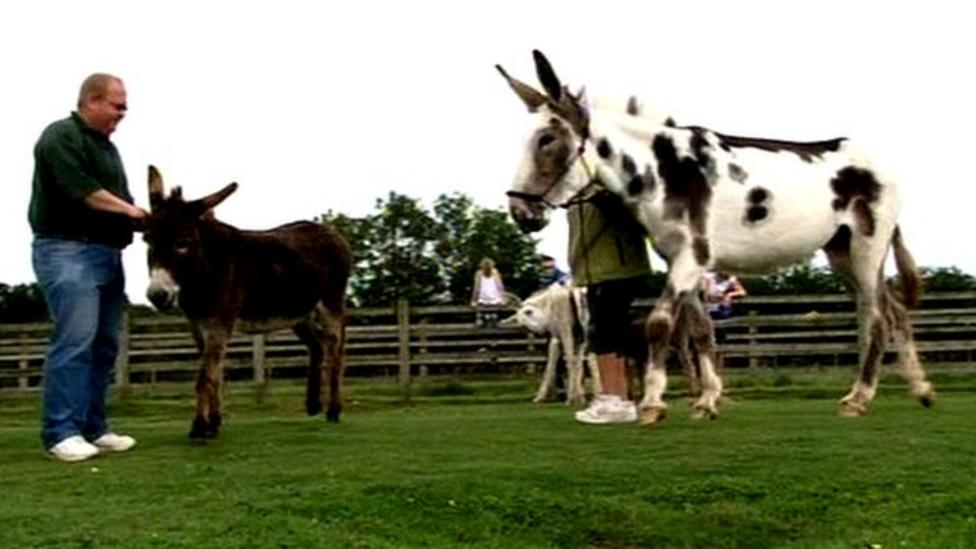 Giant donkey arrives at sanctuary