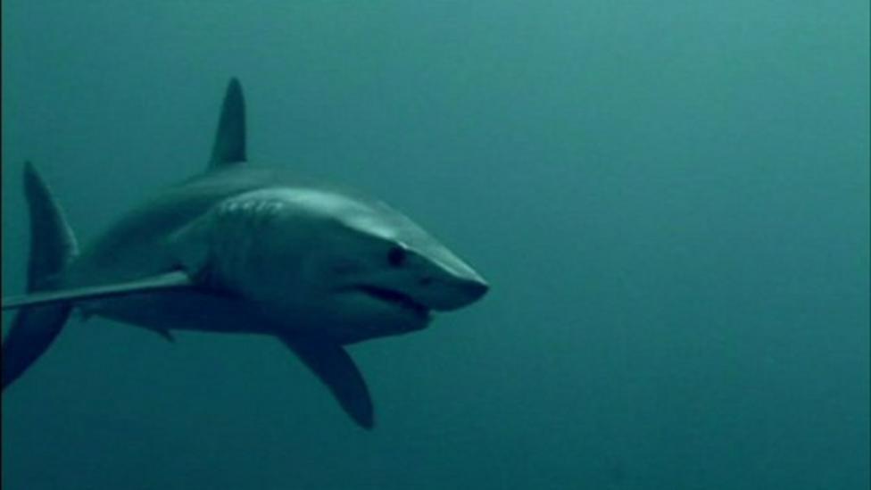 UK shark population under threat