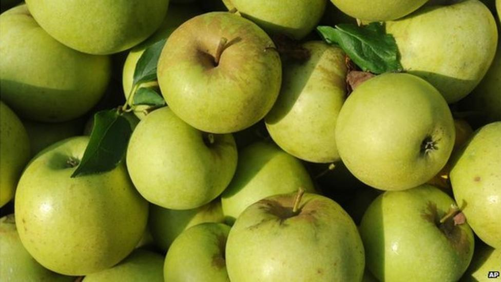 Wet weather affects apple harvest