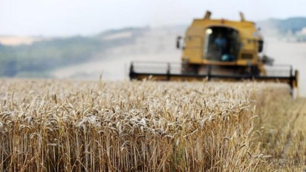 Rain causes wheat price rise