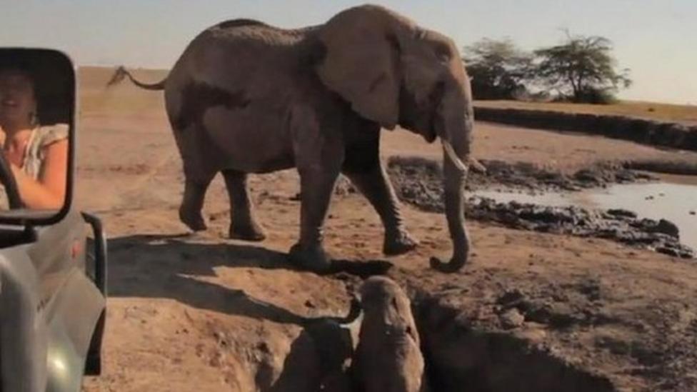 Baby elephant's dramatic rescue