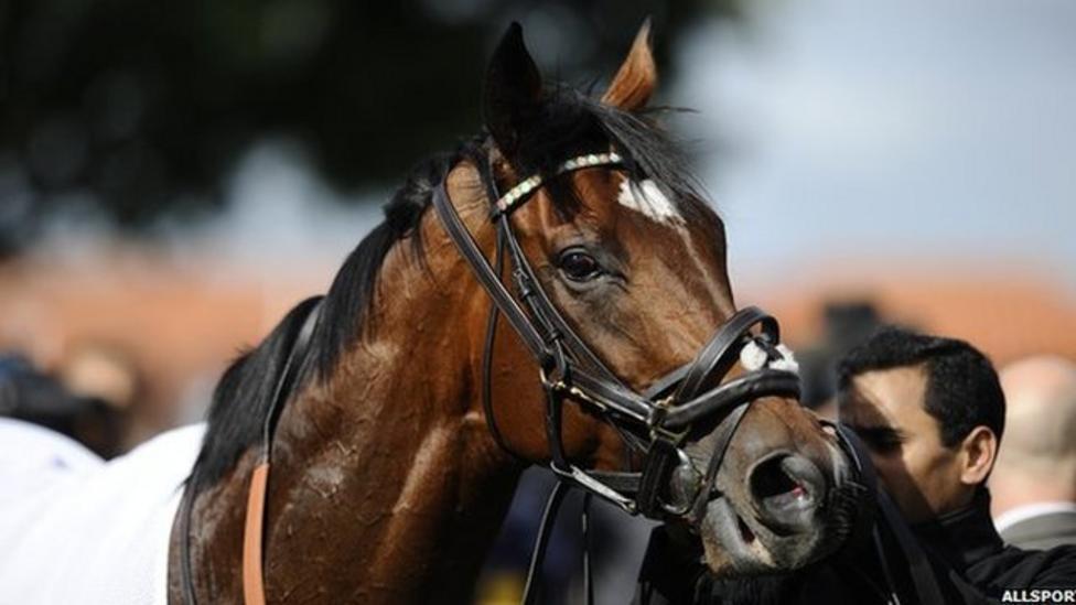 Frankel the wonder horse to quit