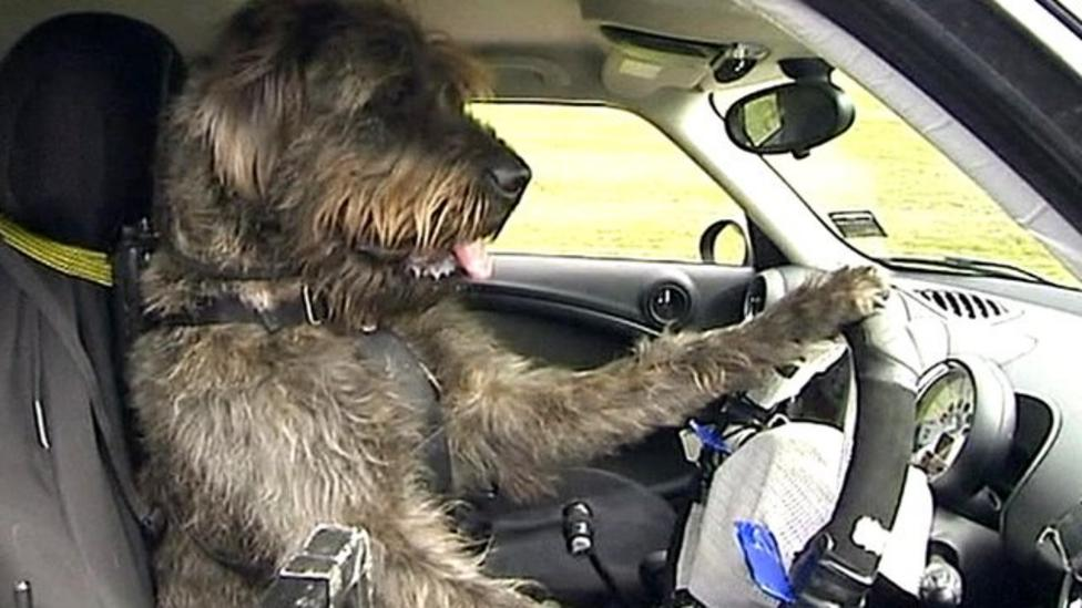Dogs driving cars in New Zealand