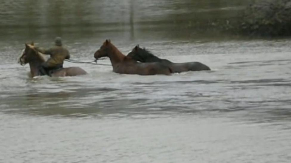 Horses rescued