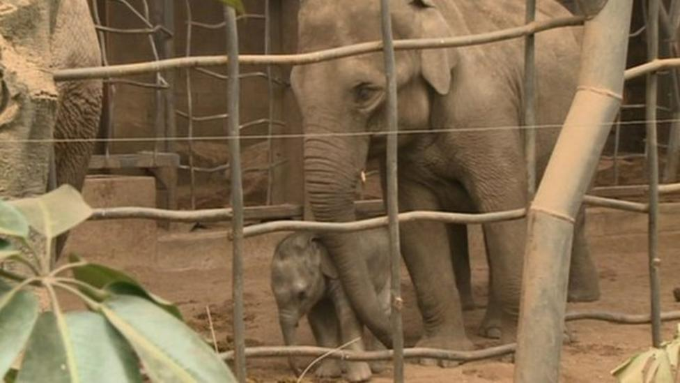 Video: Behind the scenes at zoo