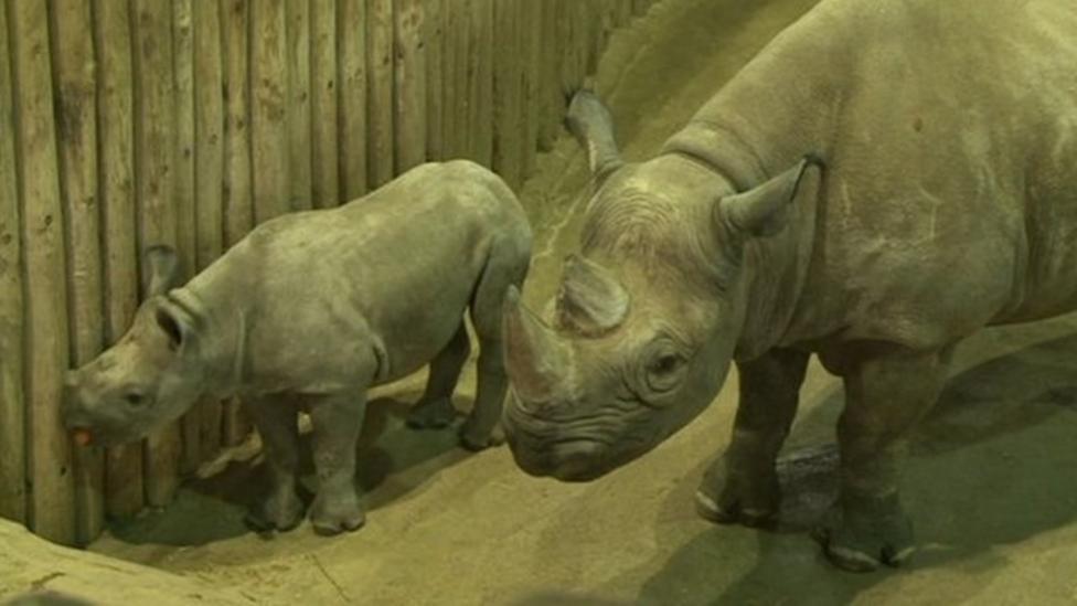 Baby boom at zoo