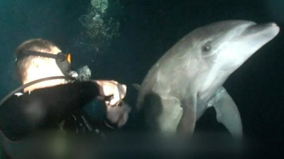 Video: Dolphin 'asks' diver for help