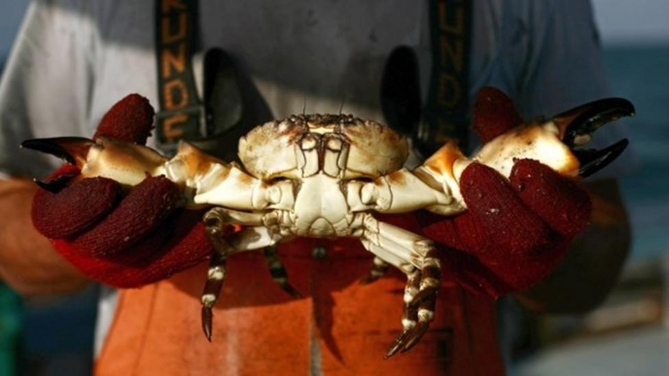 Should we treat crabs differently?