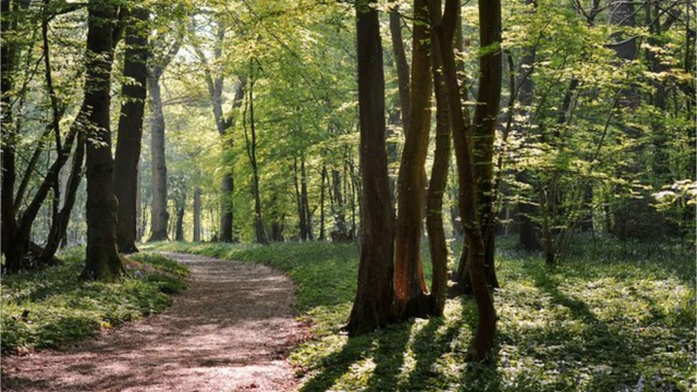 Plan to protect England's forests