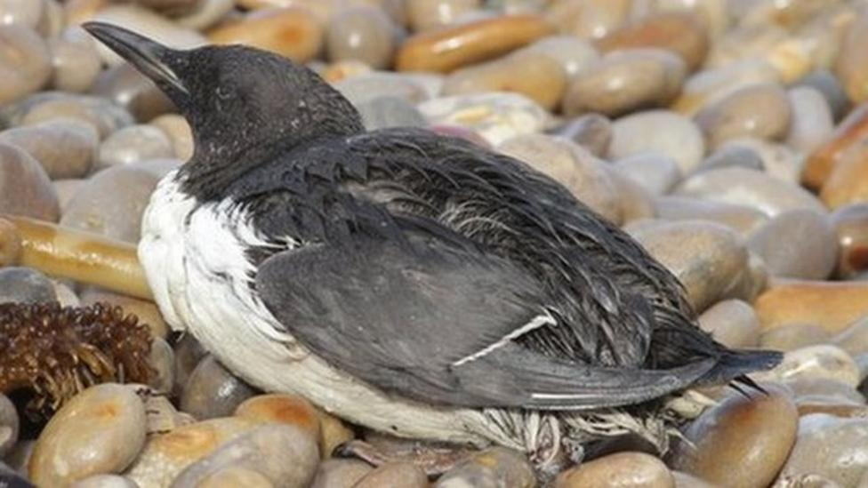 Rescue for birds covered in 'wax'