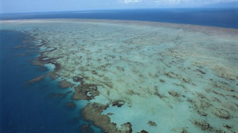 Nel's oceans report