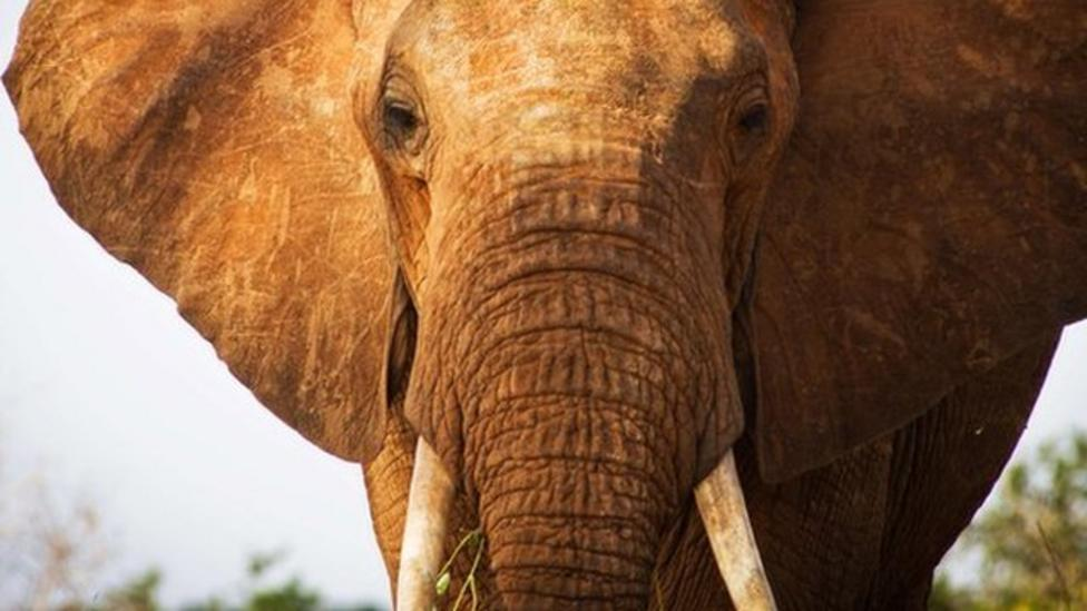 Thailand bans ivory trade