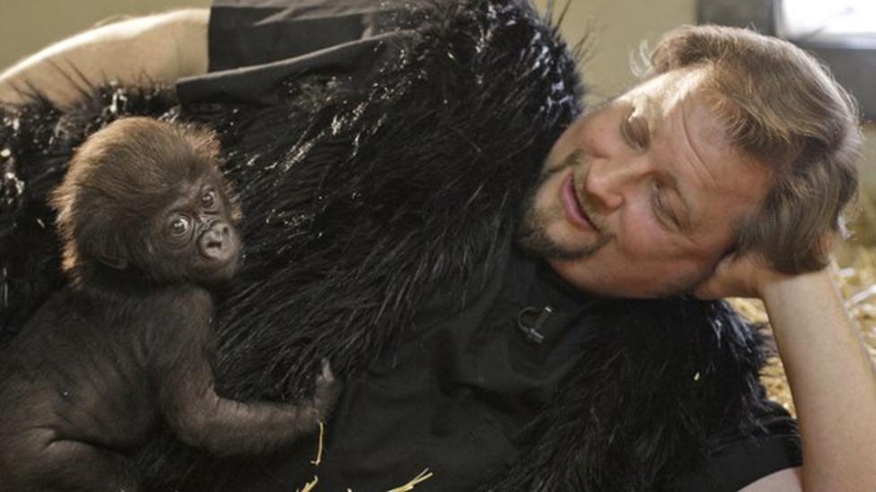Baby gorilla with human parents!