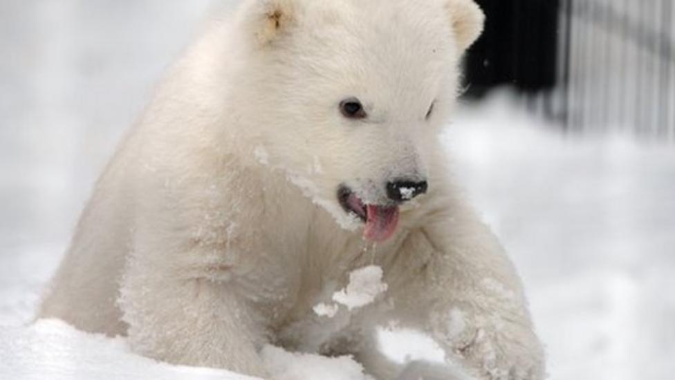 New home for orphaned polar bear