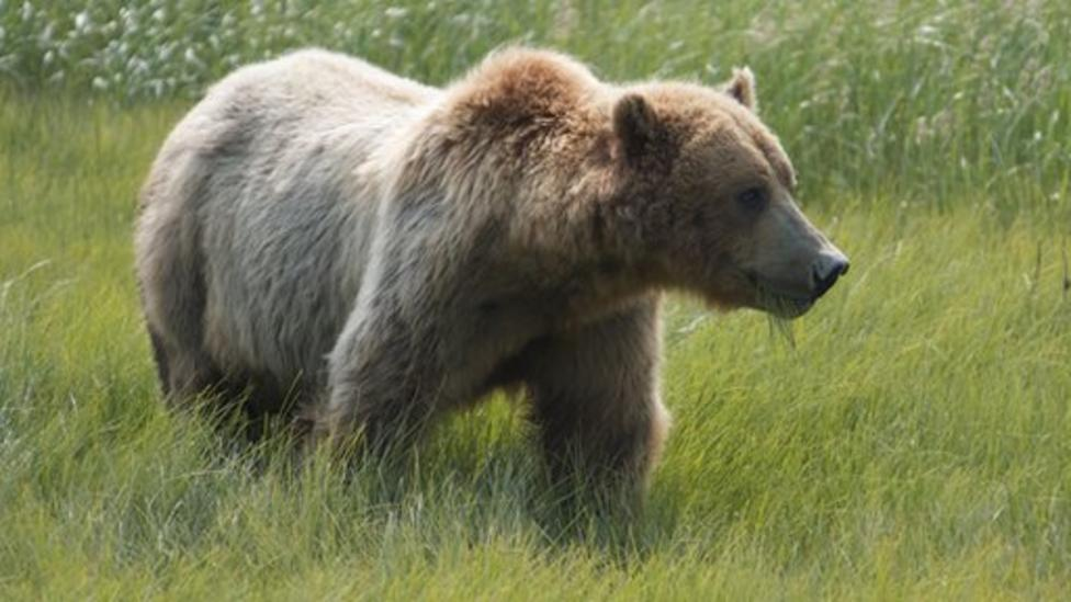 What's it's like to live with bears?