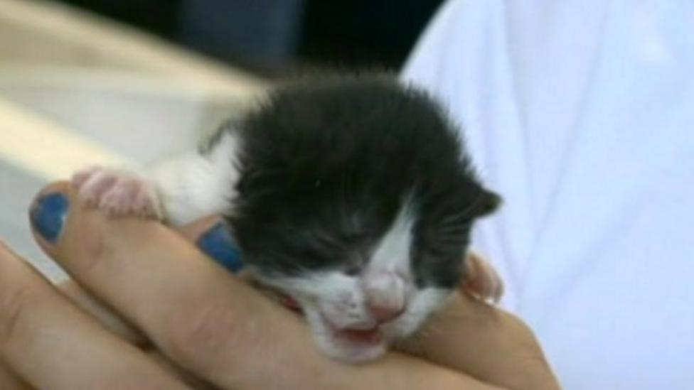 Animal cruelty cases up a third