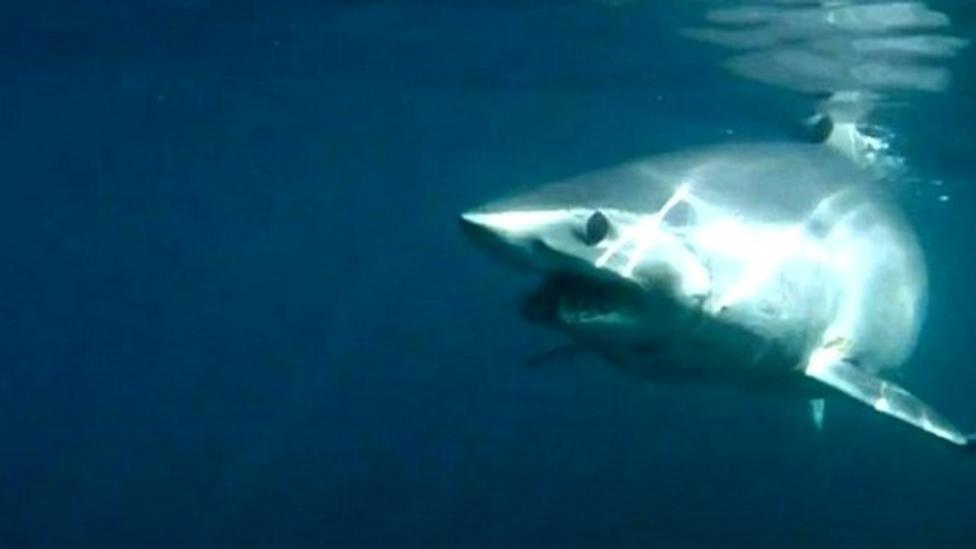 Video: Shark steals from Fisherman's line