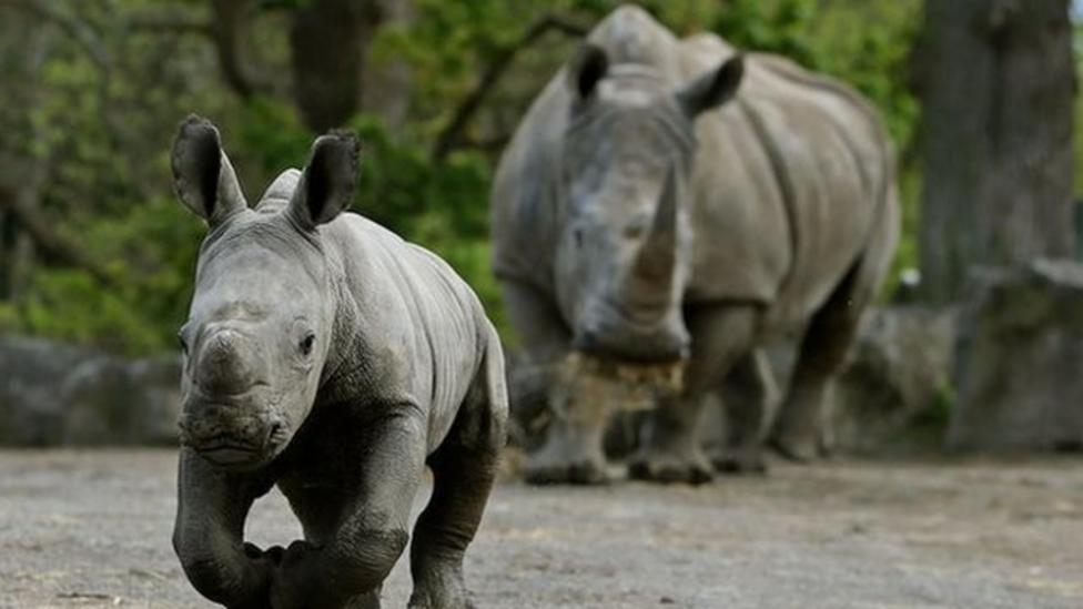 Poaching in Africa at all time high