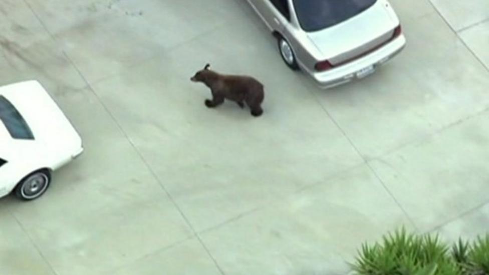 The black bear in the back garden