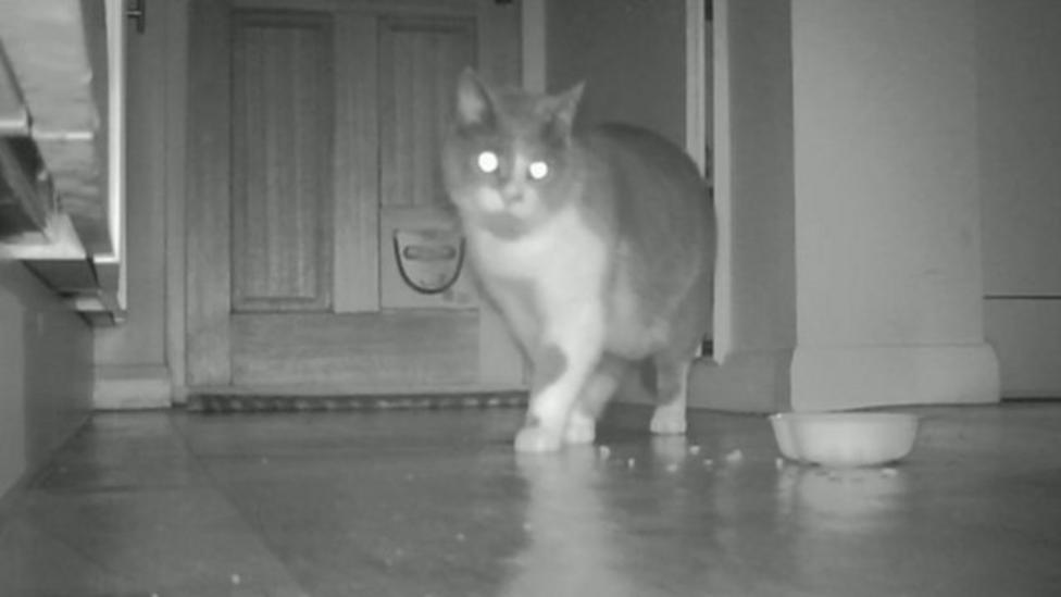 Cats' secret lives uncovered