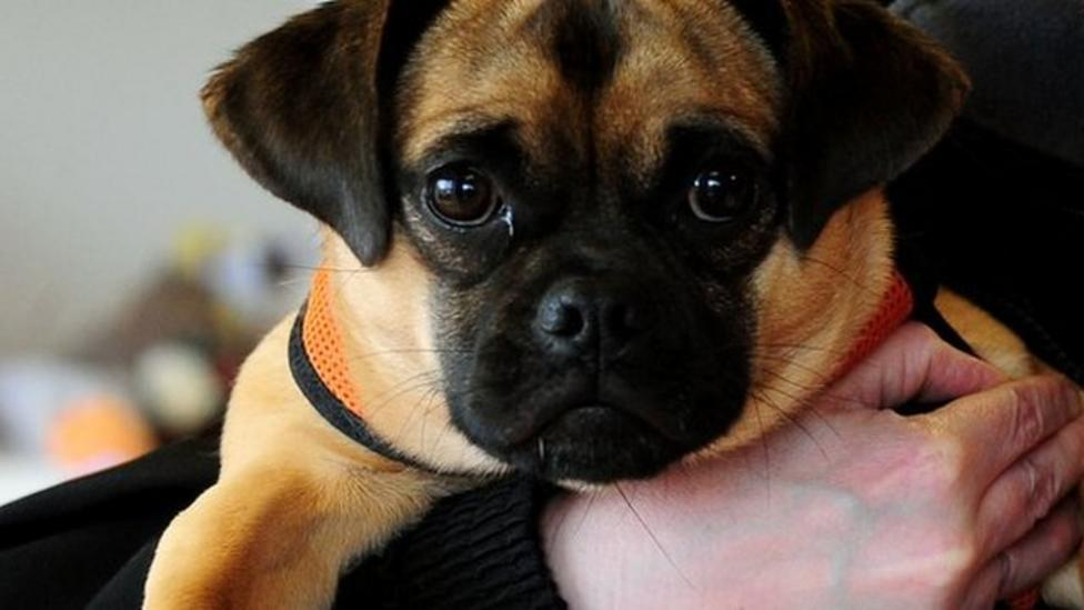 More pets abandoned during holidays