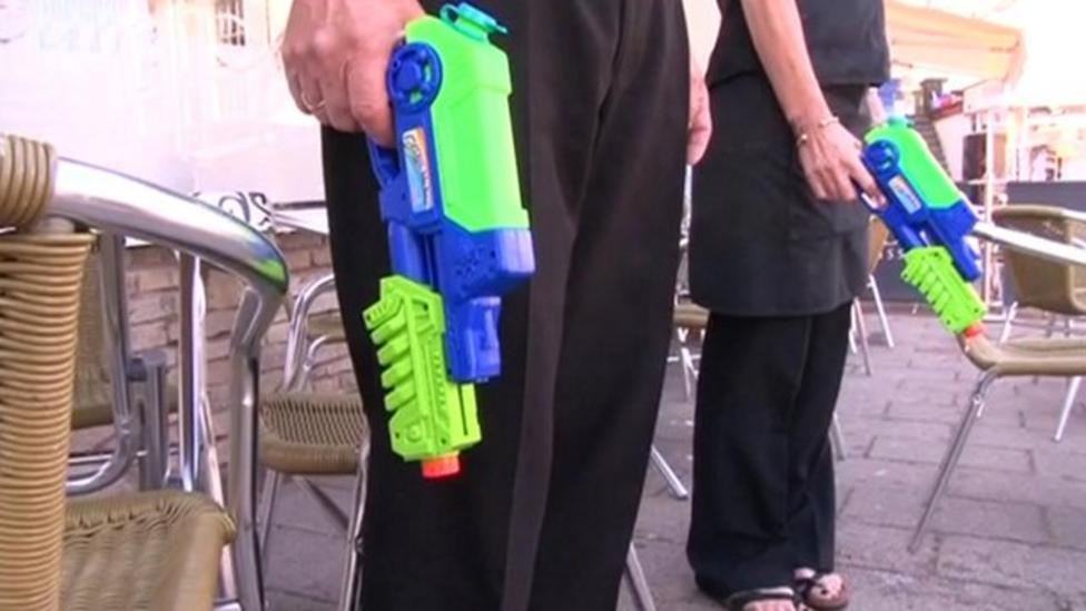 Cafe scares seagulls with water pistols