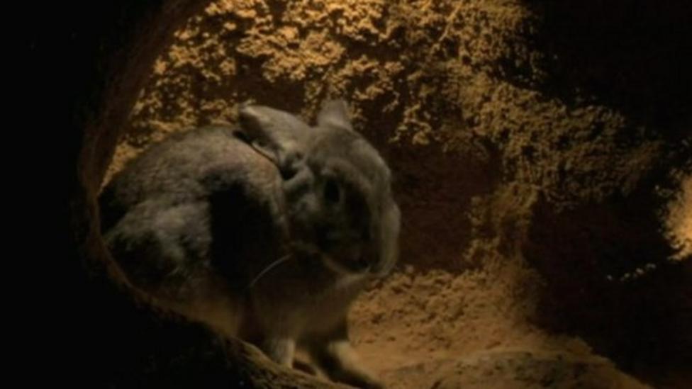 Sneak peek at underground animals