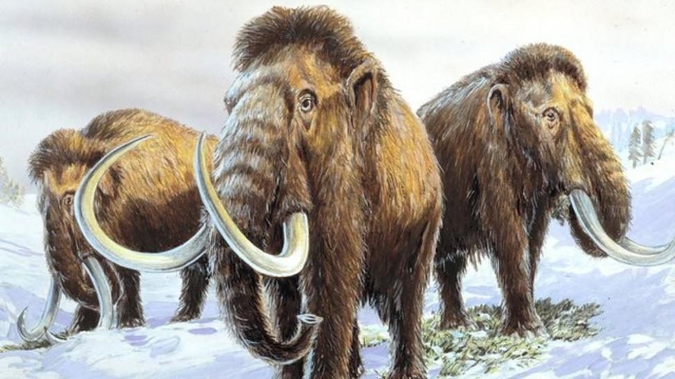 How the mammoth became extinct
