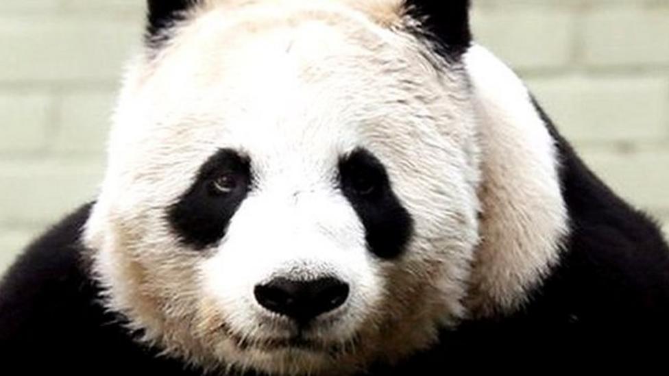 """Saving pandas """"waste of money"""""""