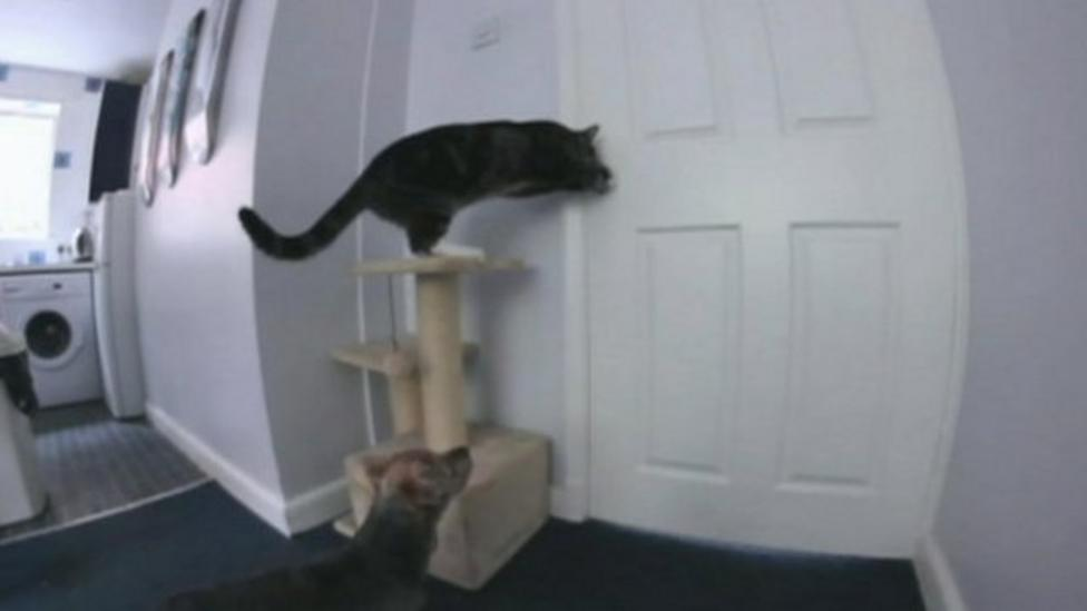 Cat and dog escape from kitchen
