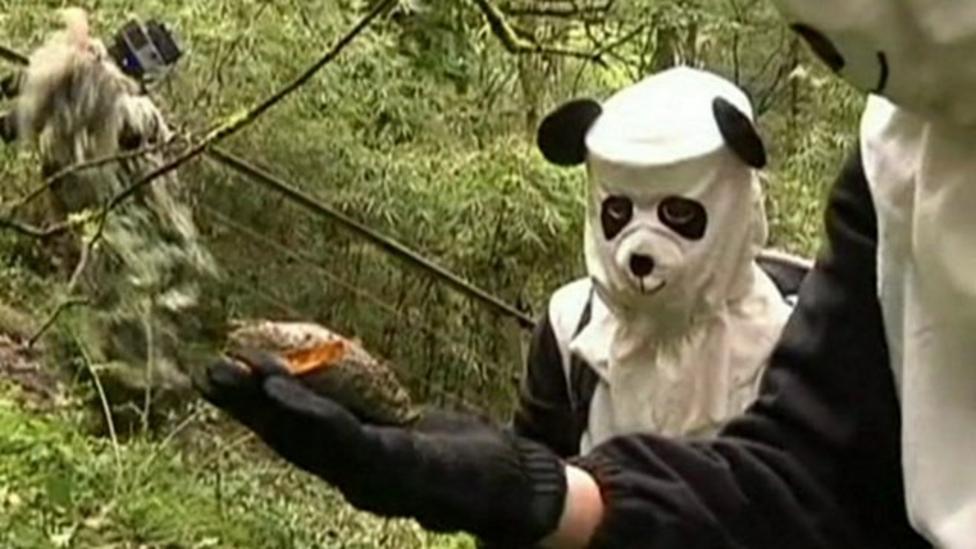 Conservationists dress as pandas