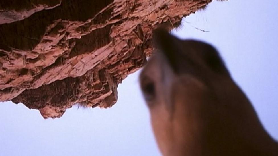 Cheeky eagle pinches animal camera