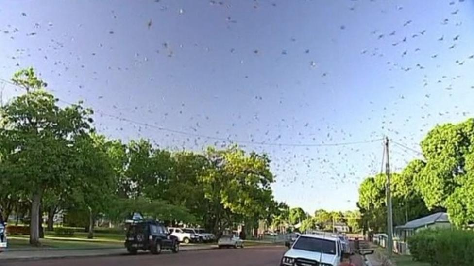 Thousands of bats take over Aussie town