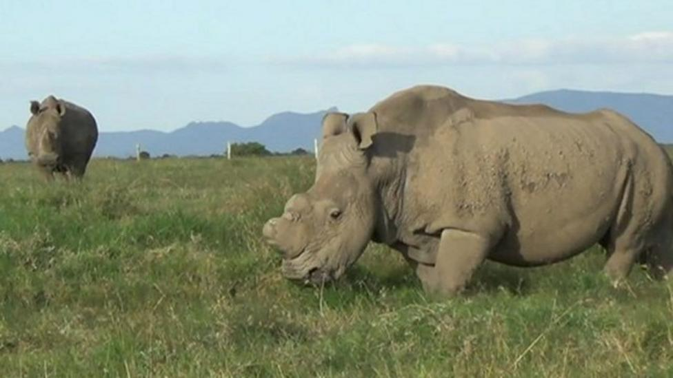 Drones being tested to protect rhinos