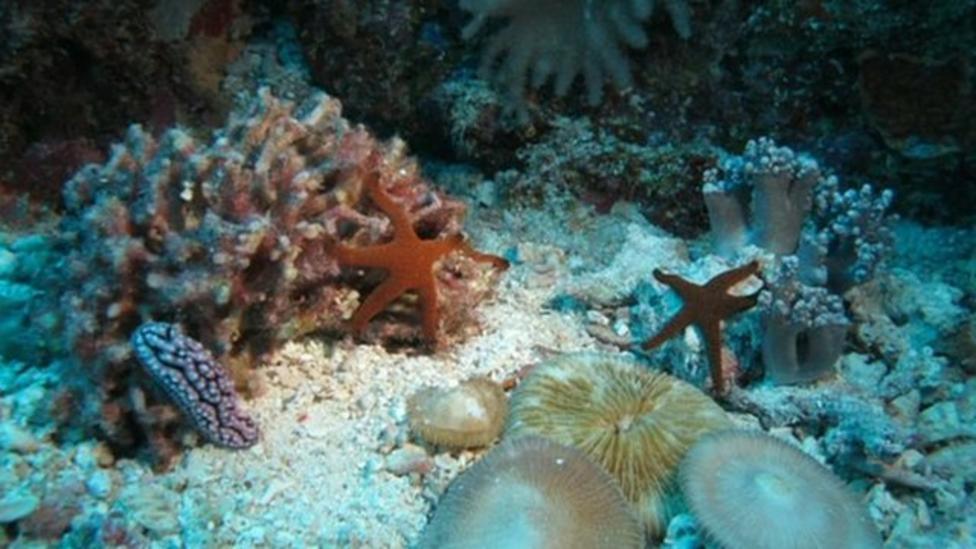 Time-lapse clip shows secret life of a coral