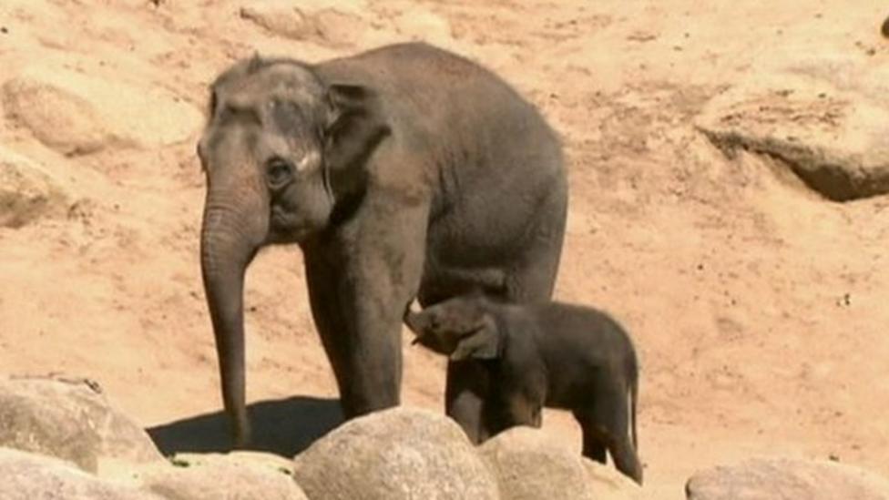 Baby elephant earns 'confident' name